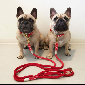 the perfect leash ~ collar set