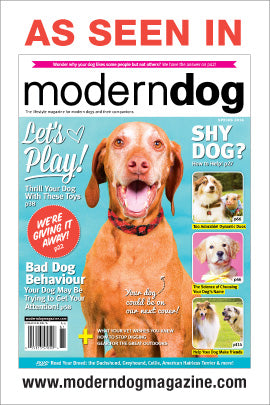Find us in Modern Dog Magazine's Spring Issue- Editor's Pick!