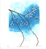 Blackthorn blossom 19
