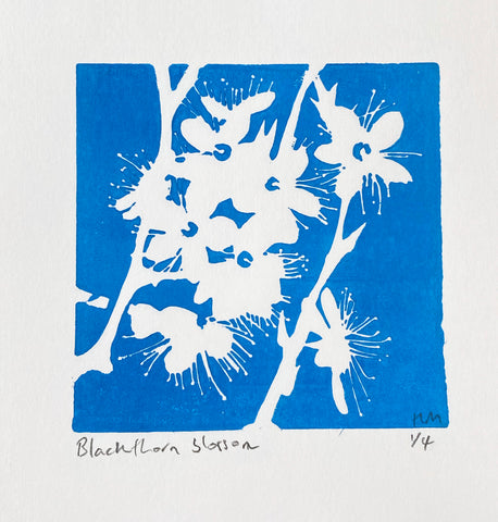 Blackthorn Blossom Blue Sky