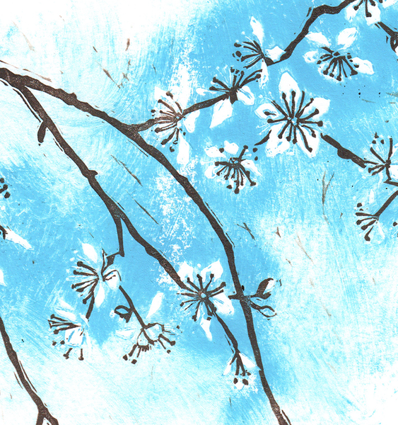 Blackthorn blossom 3