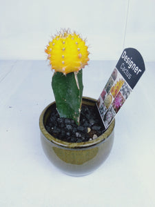 Cactus graft stone 60mm with stonewash pot - Pookipoiga