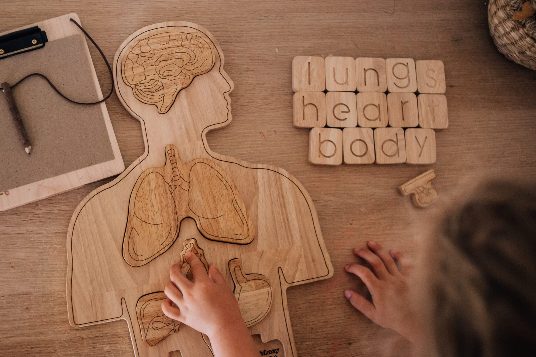 Wooden Anatomy Puzzle - The Little Interior
