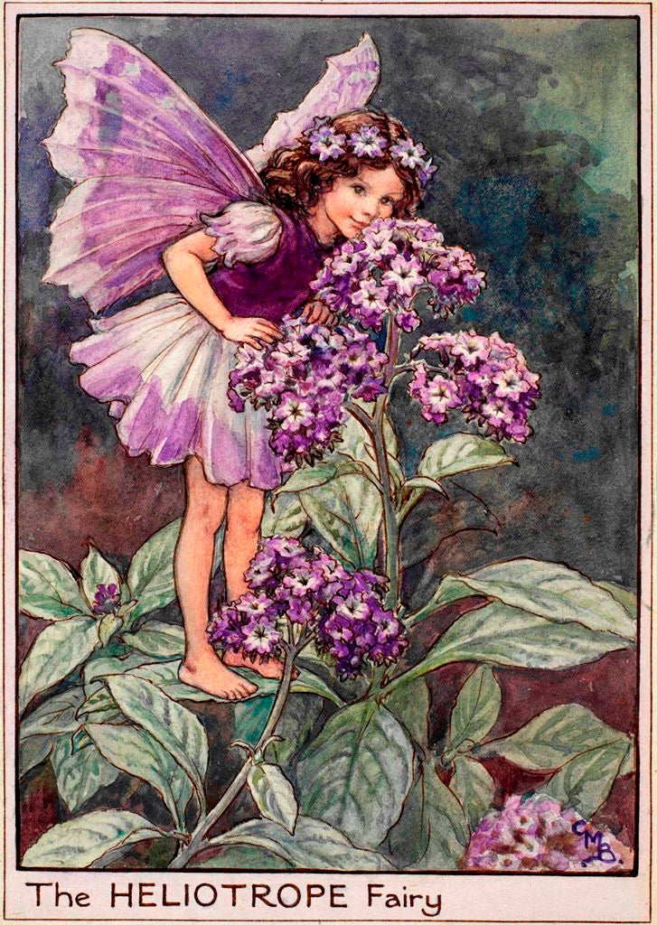 Flower Fairy Square Tin - Heliotrope