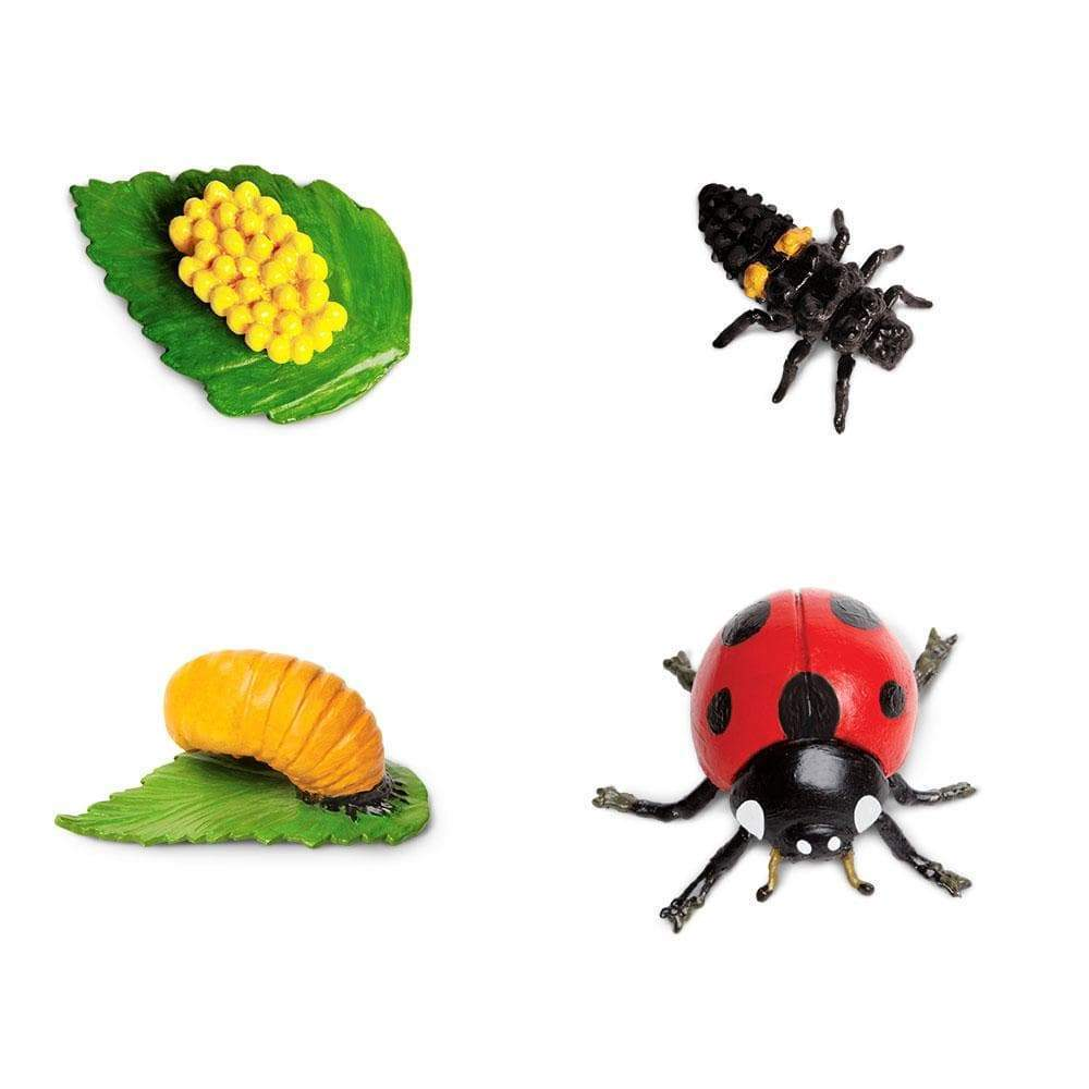 Safariology - Life Cycle Of A Ladybug