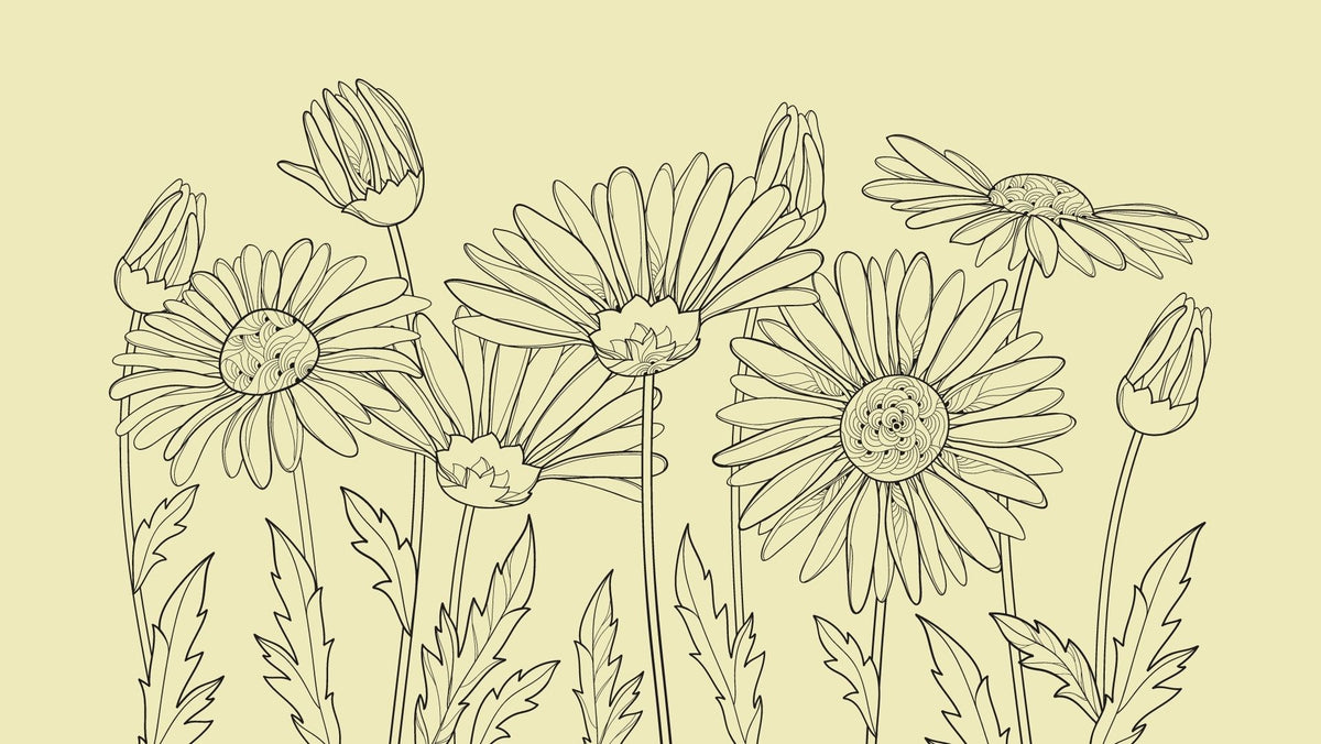 The Power of Chamomile Oil