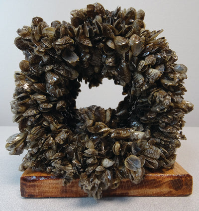 Protecting Your Pumps & Piping From Zebra Mussels