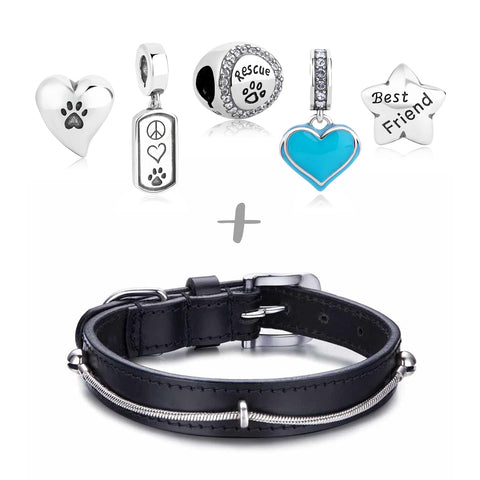 """Rescued & Loved"" Starter Collection (Collar)"