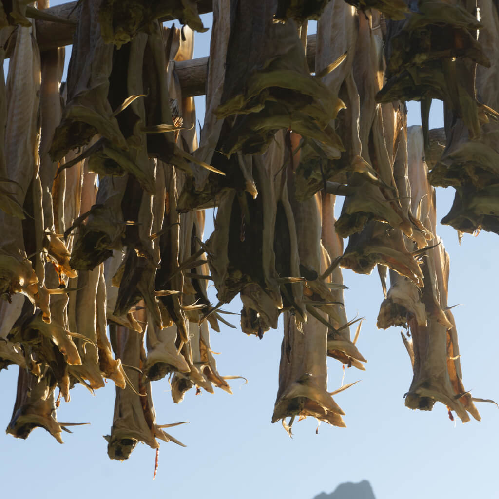 Viking's meal - dried fish