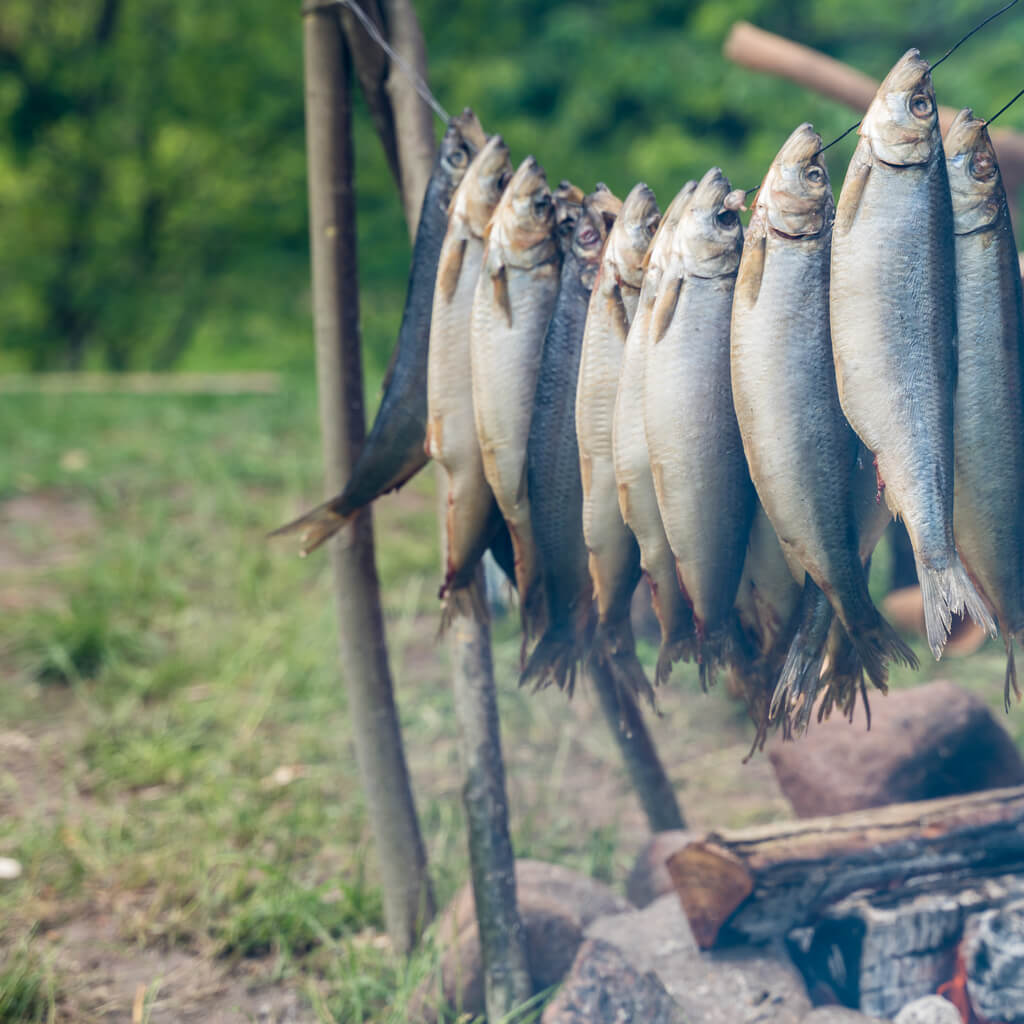 Viking's smoking fish to preserve food