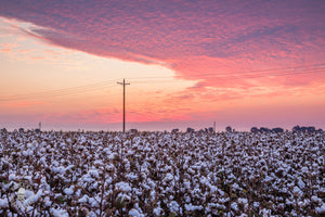 Popcorn Cotton Sunrise