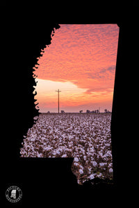 PM - Popcorn Sky Cotton Sunrise