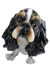 Fin the King Charles Spaniel