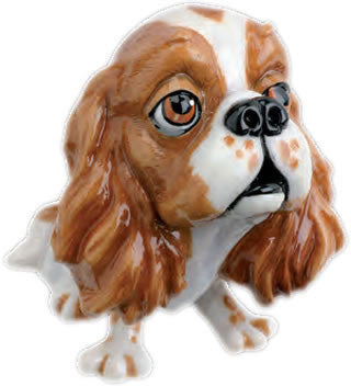 Trudi the Cavalier King Charles