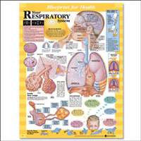 Your Respiratory System Chart