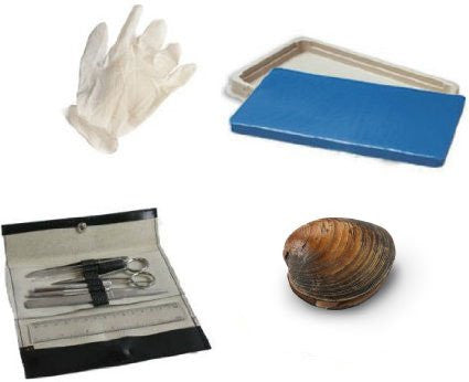 Student Dissection Kit (Clam)