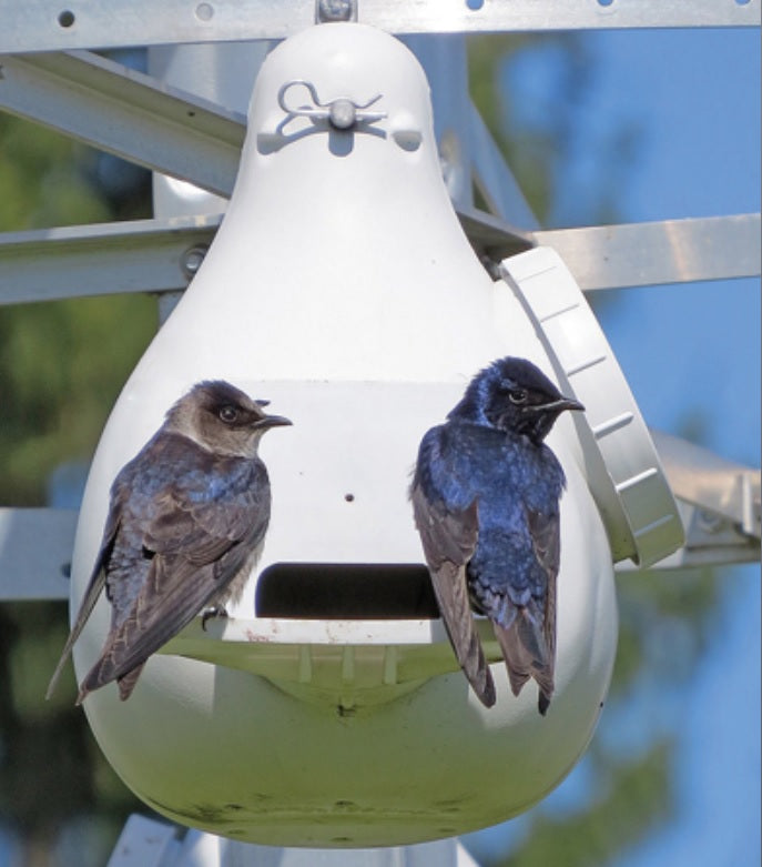 Ravenox T-14 Purple Martin Bird House - Optional Mounting Kits, Nesting Trays & Pole