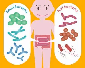 Good and Bad Gut Bacteria for MS