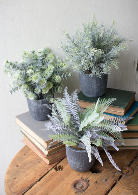 Fern Succulent with Round Gray Pot