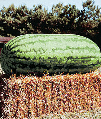watermelon-varieties