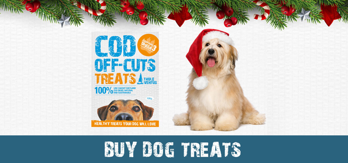Buy dog treats -  dog in santa hat