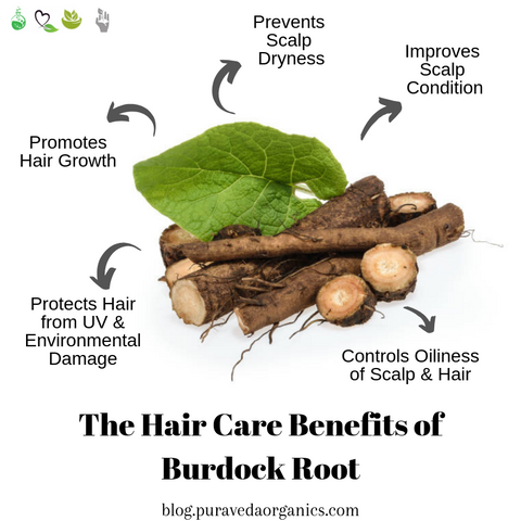 Benefits of Burdock Root for Hairs, Image taken using Yandex.com