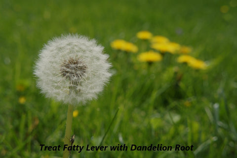 Dandelion Root for Fatty Lever, Image taken from Yandex.com