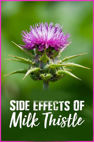 Side Effects of Milk Thistle, Image taken using Yandex.com