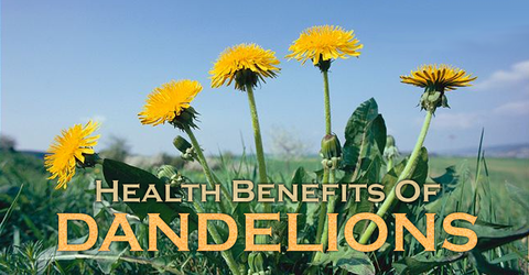 Dandelion Root Tea Health Benefits, image taken using Yandex.com