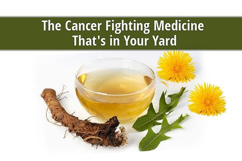 Dandelion Root to Treat Cancer, Image taken using Yandex.com