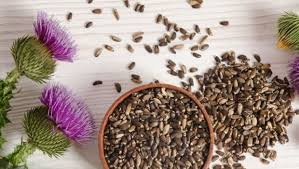 Milk Thistle, Image Taken Using Yandex.com
