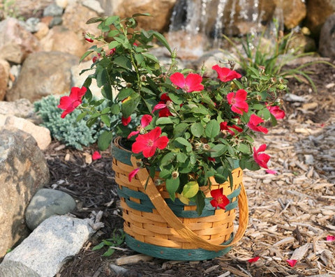 "6 "" 1 Handle Basket Sleeve - Krasco Baskets"
