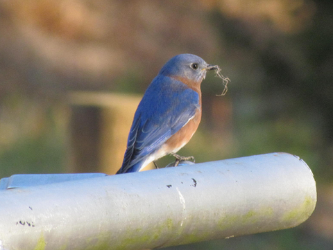 Slanted Bluebird Nestbox