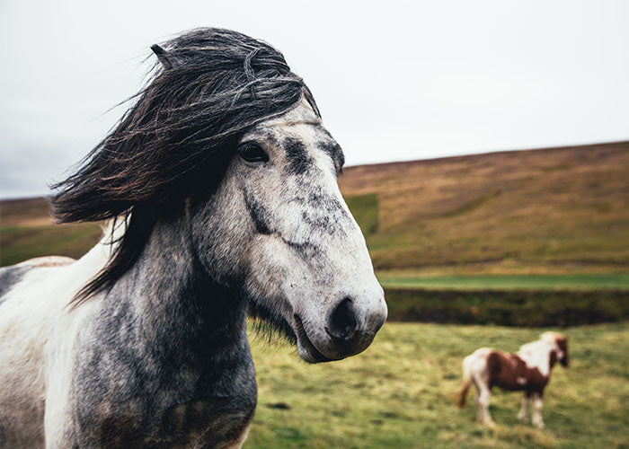 8 OF THE BEST SMART HORSE TRACKING TECHNOLOGIES
