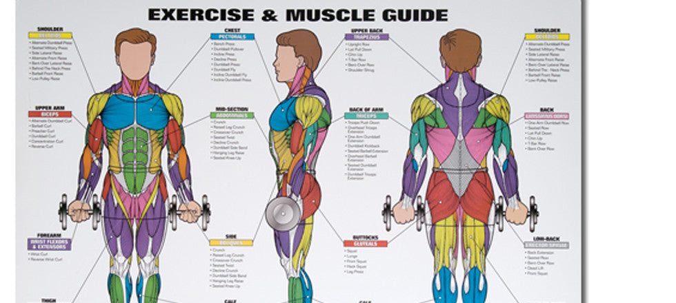 spri exercise & muscle chart - body basics, Cephalic Vein
