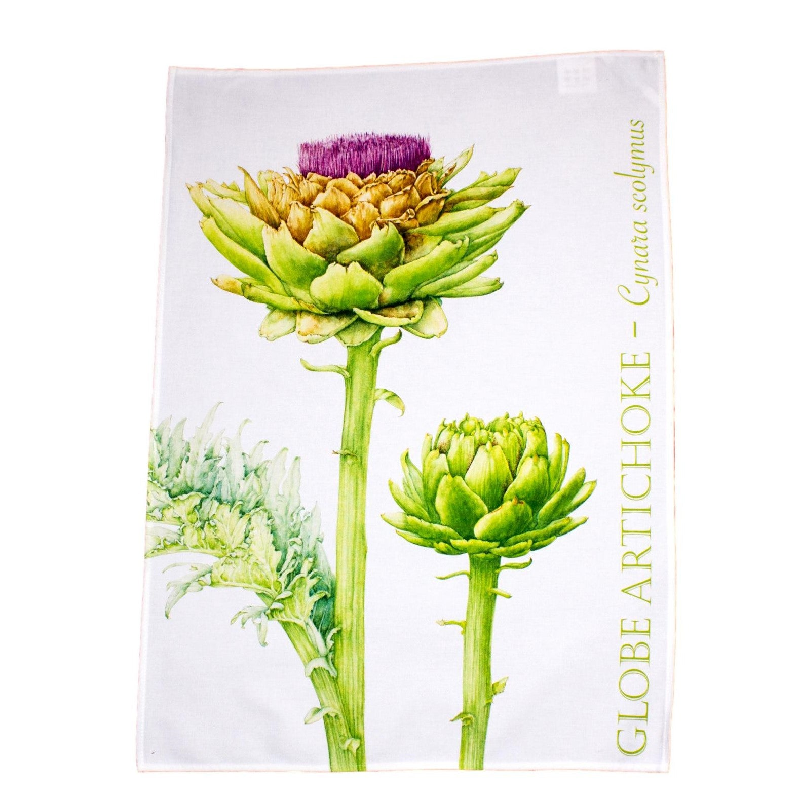 tea towel with flowering Artichoke design