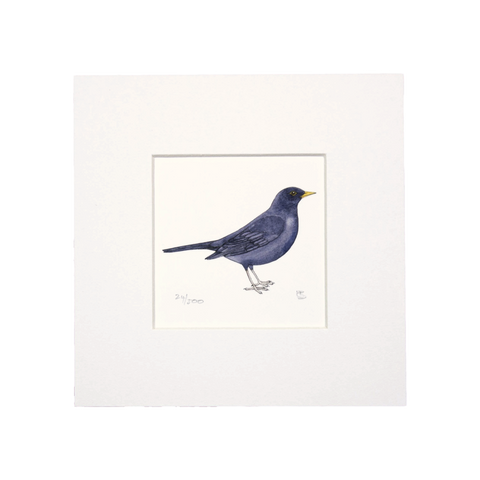 Blackbird Mini Print