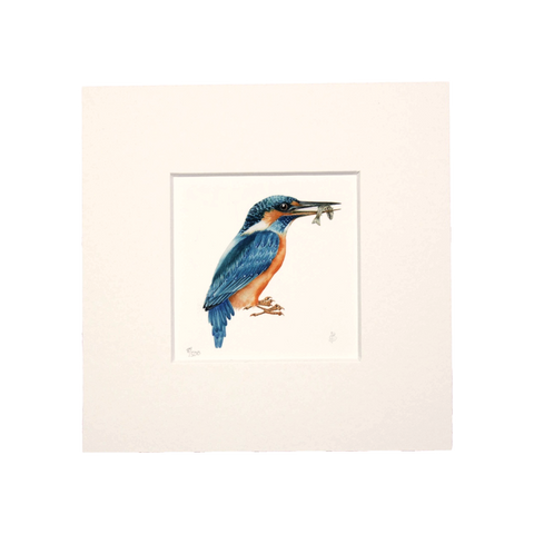 Kingfisher Mini Print
