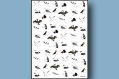 Sea Birds Gift Wrap with Tags