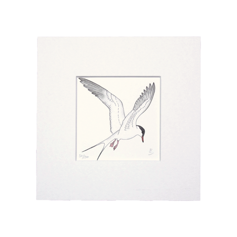 Common Tern Mini Print