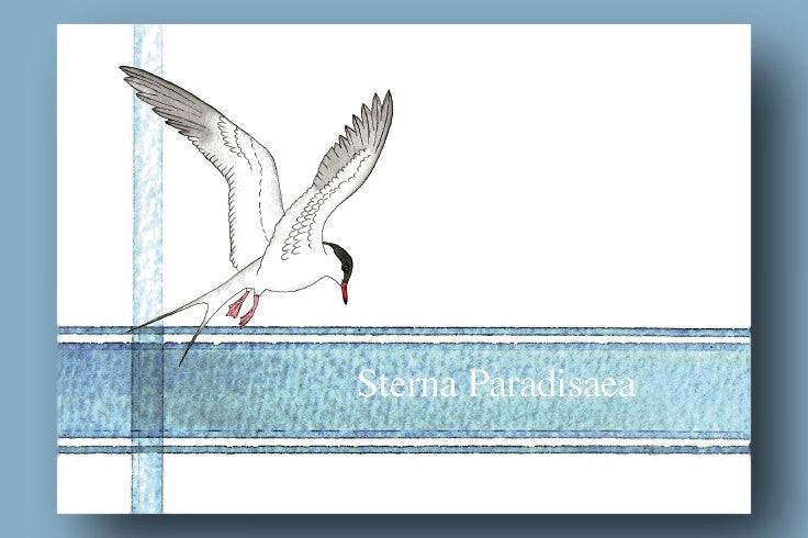 Postcard Packs - Sea Birds