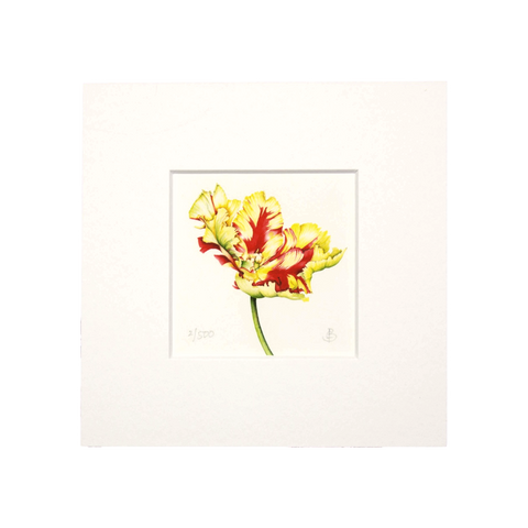 Texas Flame Tulip (Open) Mini Print