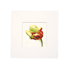 Texas Flame Tulip (Side) Mini Print