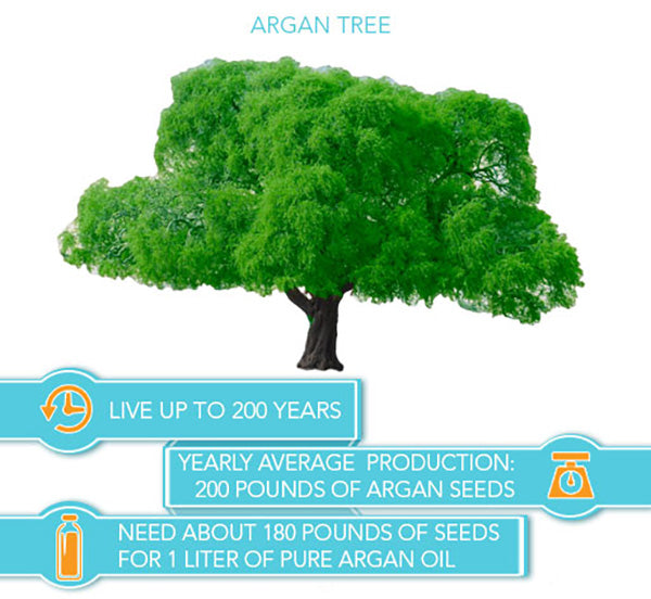 argan tree life cycle