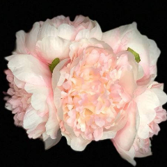 Peony Bouquet Handtied (pink)-PEO2