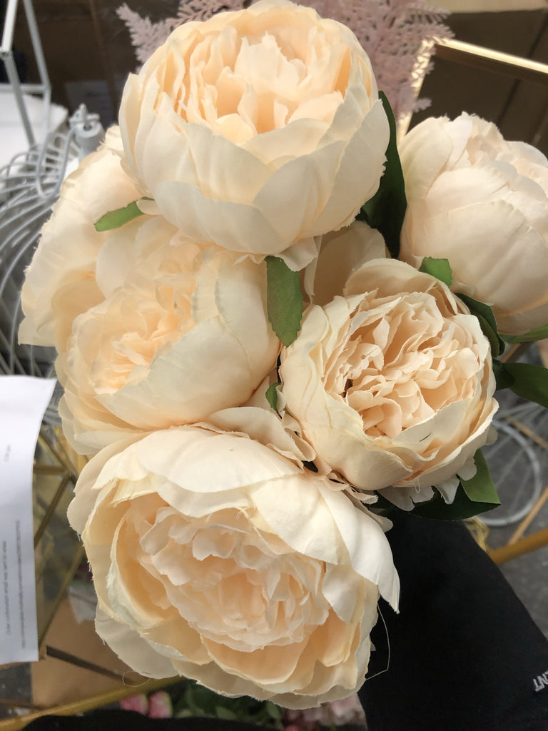 7 HEAD PEONIES champagne BUNCH