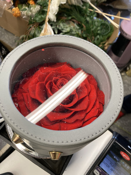 Preserved large red Rose in round box
