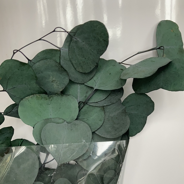 Preserved eucalyptus bunch green silver dollar