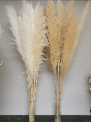 "Large Cream pampas grass stem 40"" tall"