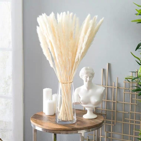"25"" Cream/bleached white pack of 15 pampas grass stick (M)"